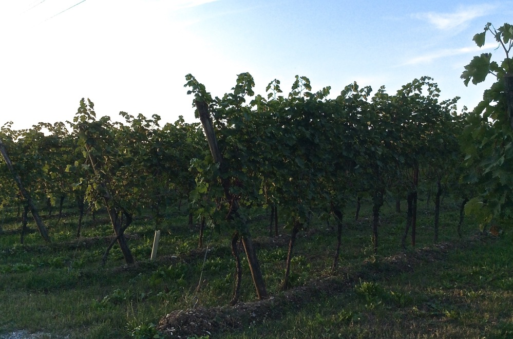 Selva Capuzza IV