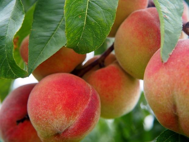 peach-2632182_1280