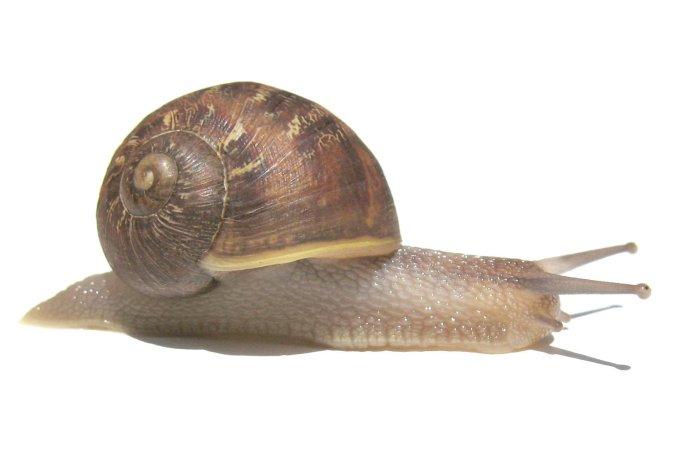 snail-1386018